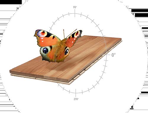 Bild Schmetterling